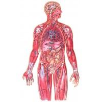 Витамины по заболеваниям