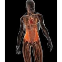 Заболевания онкологические (рак)