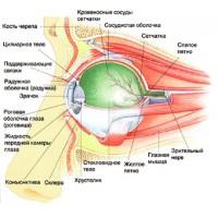 Заболевания глаз, витамины для зрения